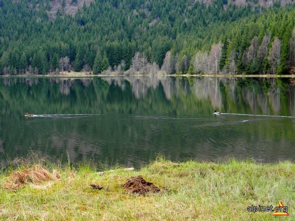 Rate pe lacul Sfanta Ana