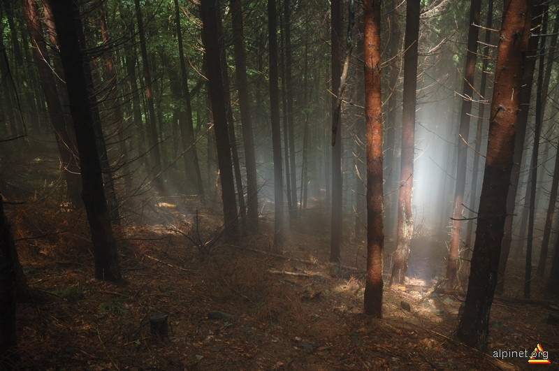 tainică pădure