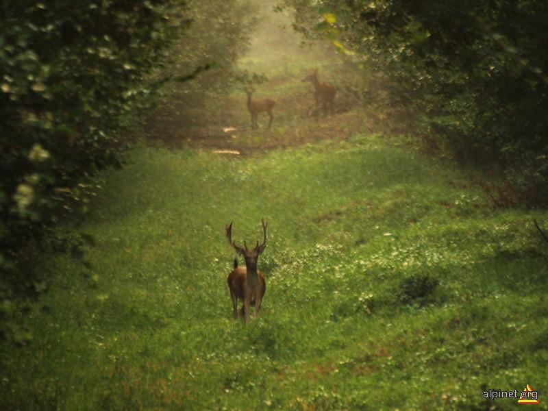 Poveştile pădurii
