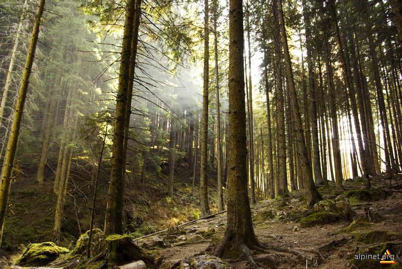 Pădure crăiasă