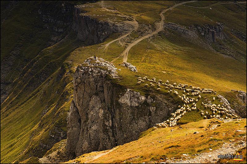păşuni alpine