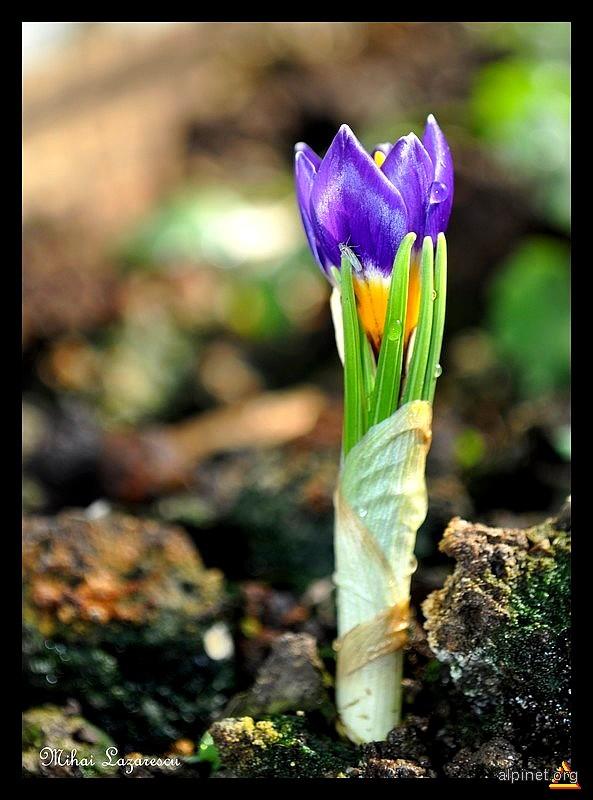 Magia primăverii