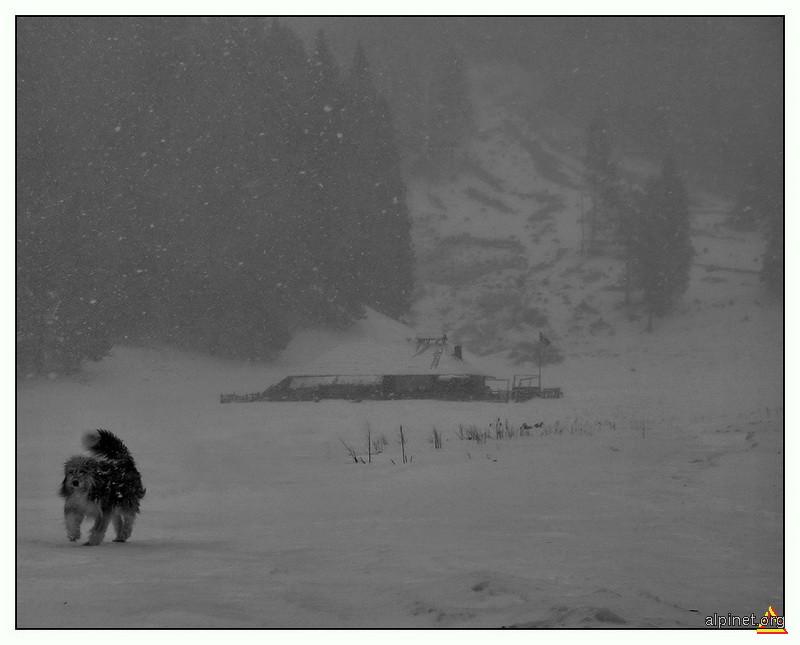 Se-aude un lătrat prin iarna grea