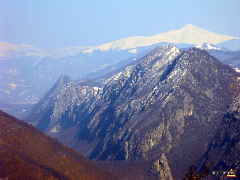 Oslea din Valcan