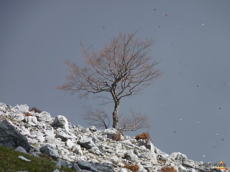 Copacul...
