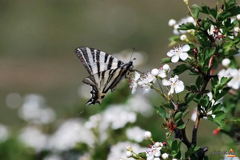 Ai vrea sa fi fluture pentru o zi?