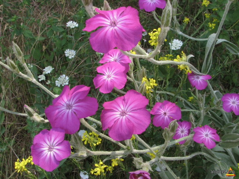 Armonii pe teme violet