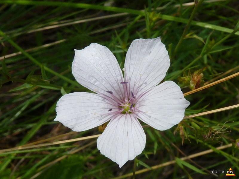 Doar o floare...