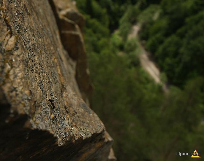 Furnica alpinistă