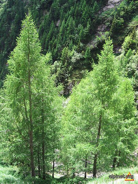 Nuanţe de verde