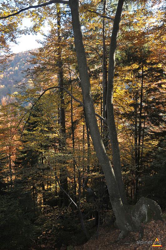 Toamna pe dealul Comănesei