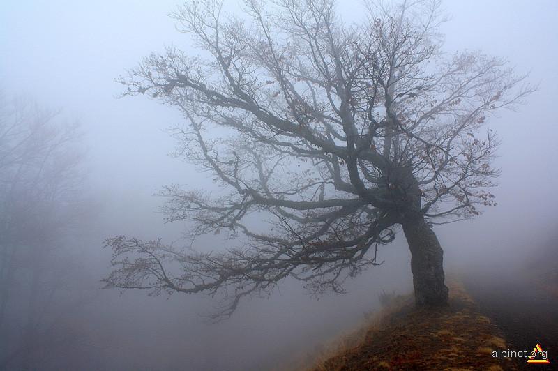 Reper în ceaţă