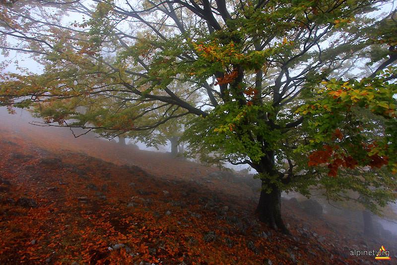 diagonală în ceaţă