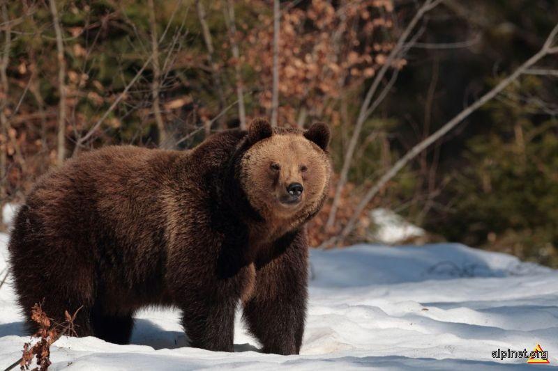 Ce mare esti...mama ursoaica