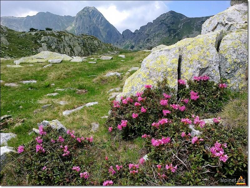 Nu toti muntii au pietre pretioase, nu toate padurile au lemne de santal. Nici oamenii buni nu se intalnesc oriunde.