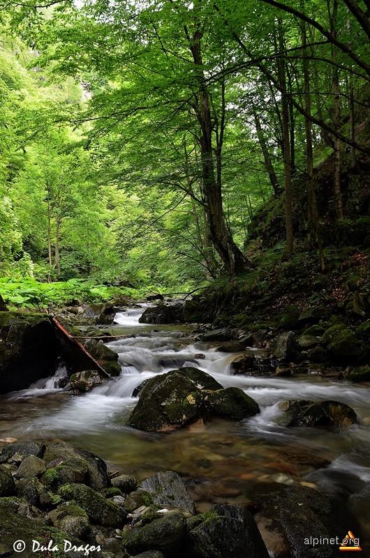 Valea Polatiste