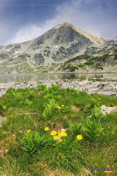 Vârful Custura Bucurei