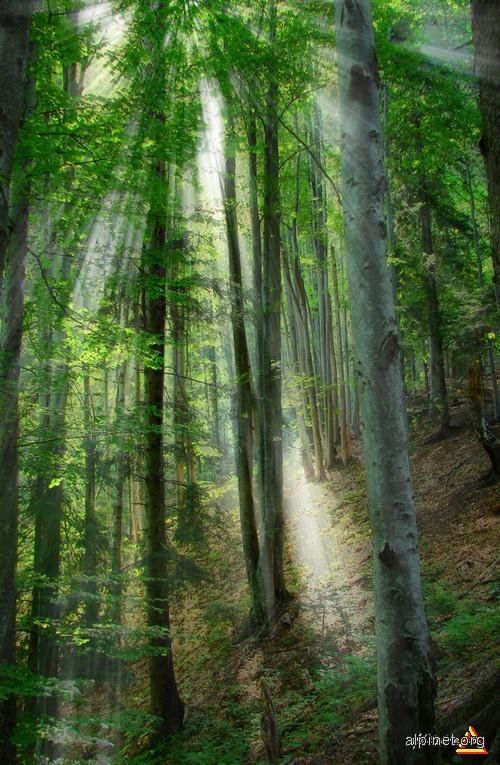 Prin pădurea magică