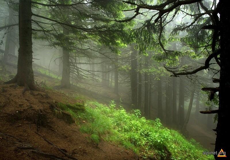 Tăcerea pădurii