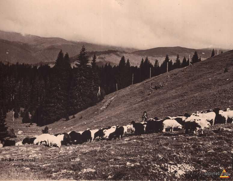 Ciobanasul