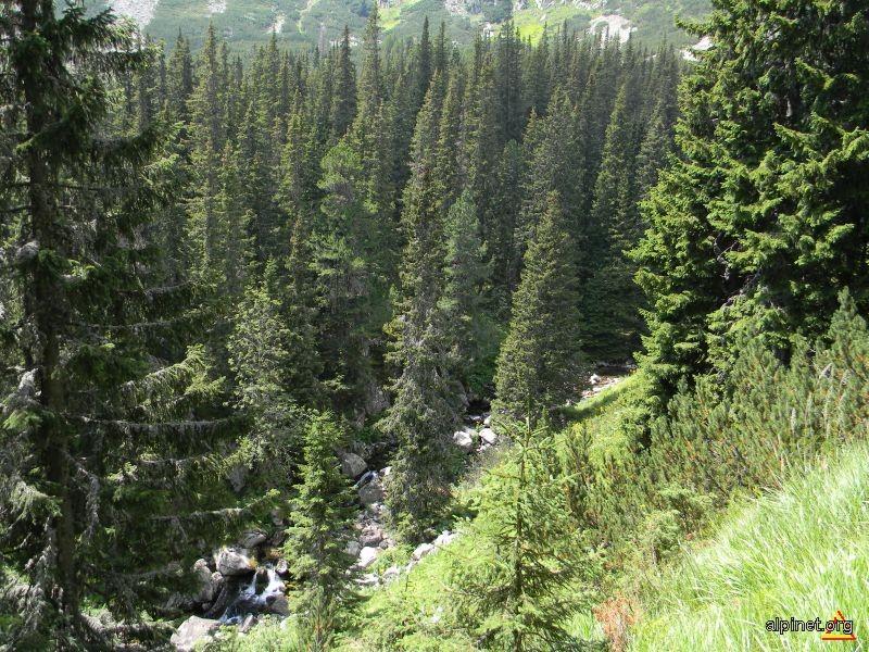 Valea Bucurei