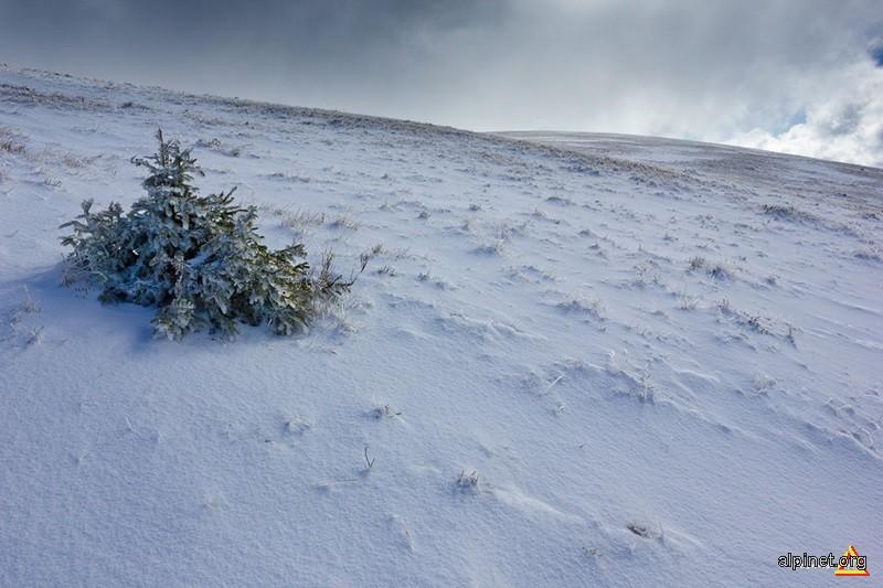 Îndurând prima zăpadă