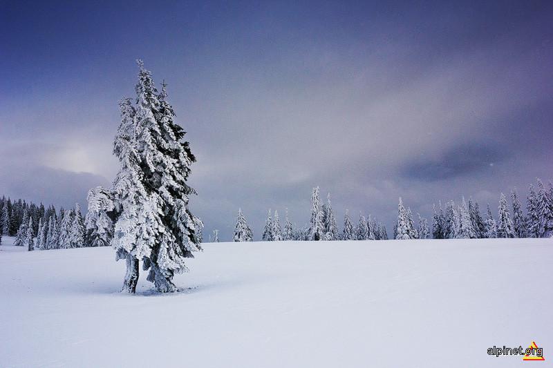Poveste de iarnă