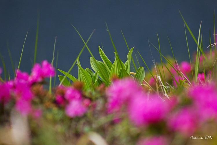 O strigoaie între flori