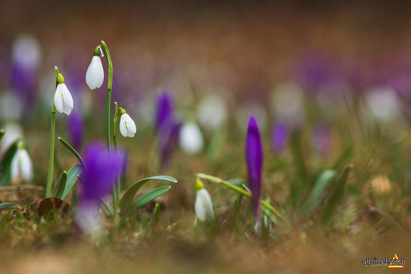 Vestitorii primăverii
