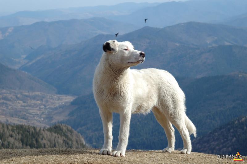 Câinele pătat de la Dochia